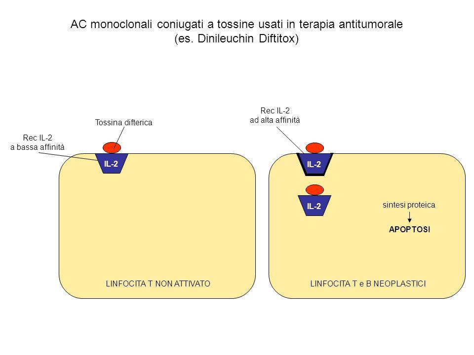 AC monoclonali coniugati a tossine usati in terapia antitumorale (es