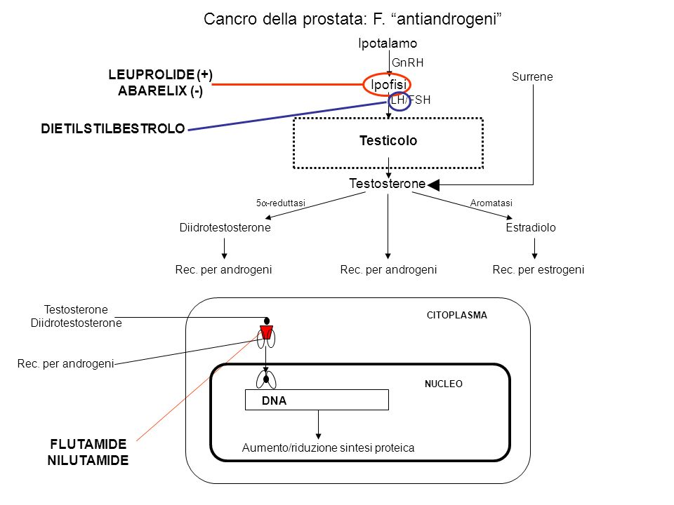 LEUPROLIDE (+) ABARELIX (-)