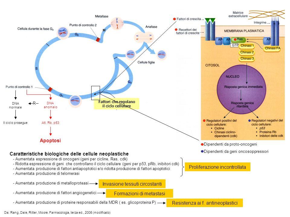 Fattori che regolano il ciclo cellulare