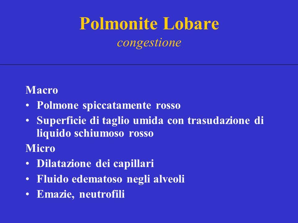 Polmonite Lobare congestione