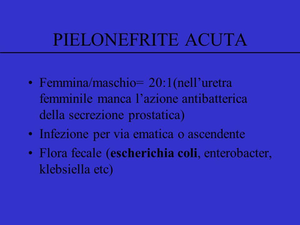 PIELONEFRITE ACUTA Femmina/maschio= 20:1(nell'uretra femminile manca l'azione antibatterica della secrezione prostatica)