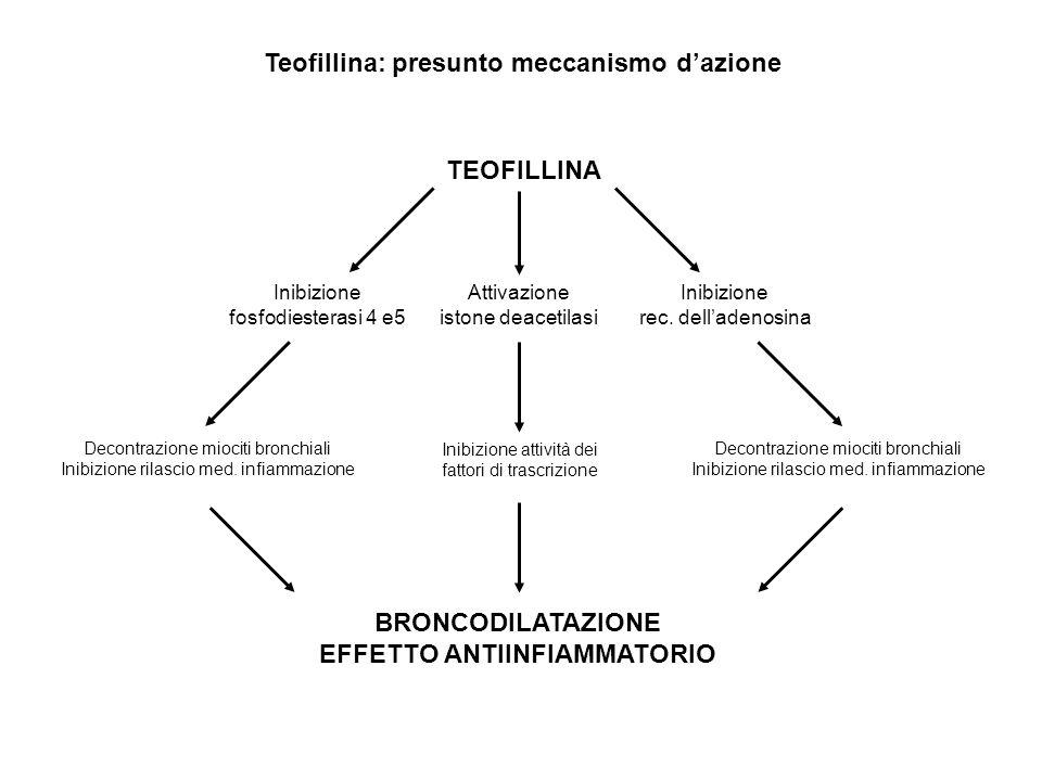 Teofillina: presunto meccanismo d'azione