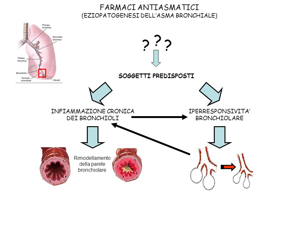 FARMACI ANTIASMATICI (EZIOPATOGENESI DELL'ASMA BRONCHIALE)