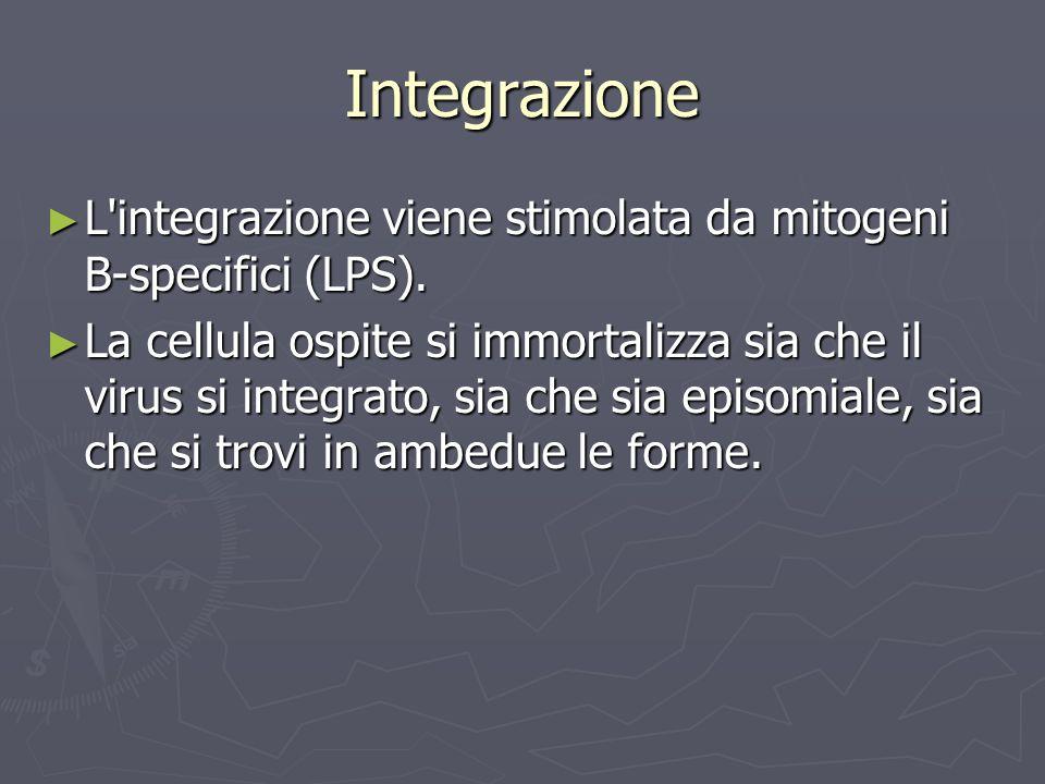 Integrazione L integrazione viene stimolata da mitogeni B-specifici (LPS).