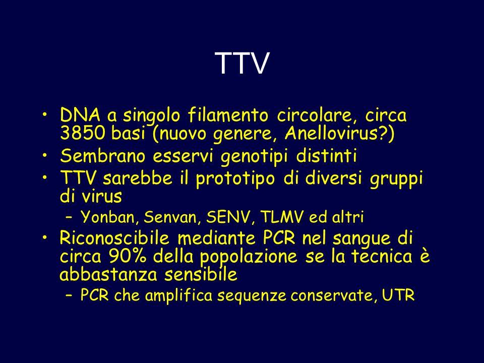 TTV DNA a singolo filamento circolare, circa 3850 basi (nuovo genere, Anellovirus ) Sembrano esservi genotipi distinti.