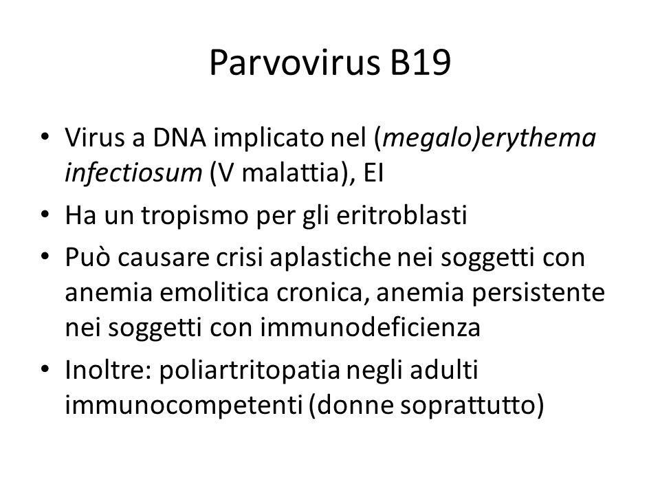Parvovirus B19 Virus a DNA implicato nel (megalo)erythema infectiosum (V malattia), EI. Ha un tropismo per gli eritroblasti.