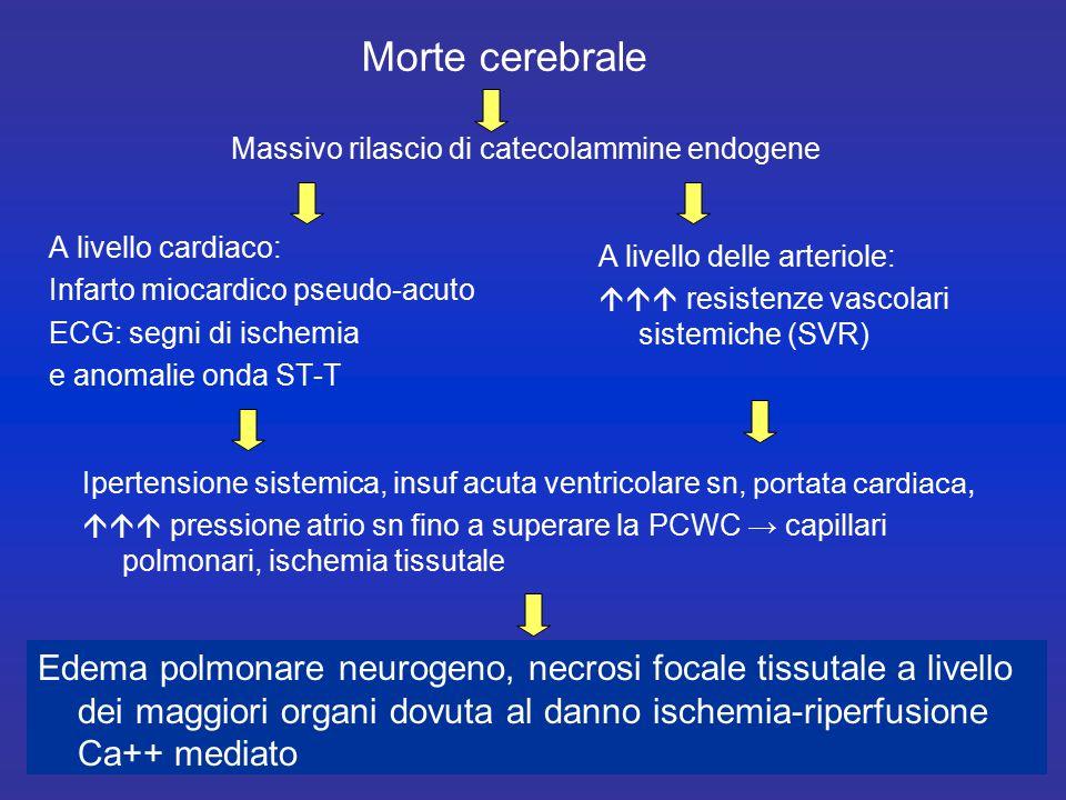 Morte cerebrale Massivo rilascio di catecolammine endogene. A livello cardiaco: Infarto miocardico pseudo-acuto.