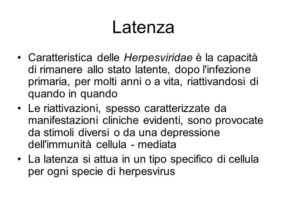 Latenza