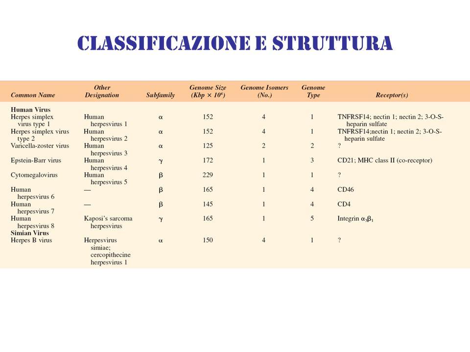 Classificazione e struttura