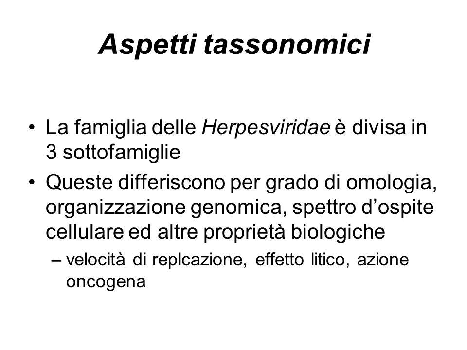Aspetti tassonomici La famiglia delle Herpesviridae è divisa in 3 sottofamiglie.
