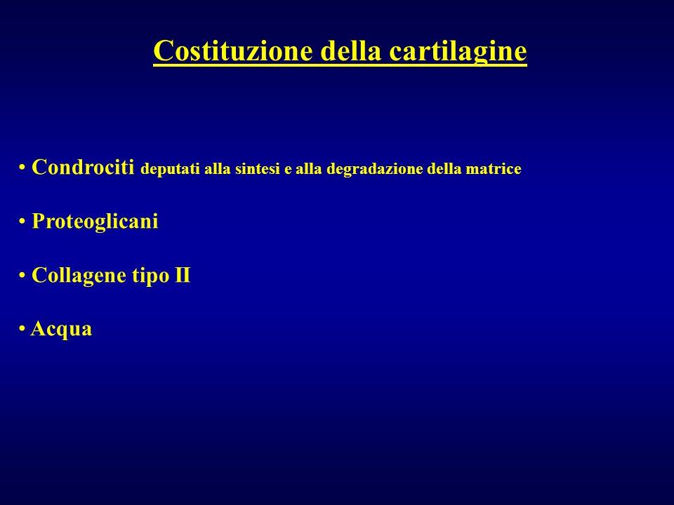Costituzione della cartilagine