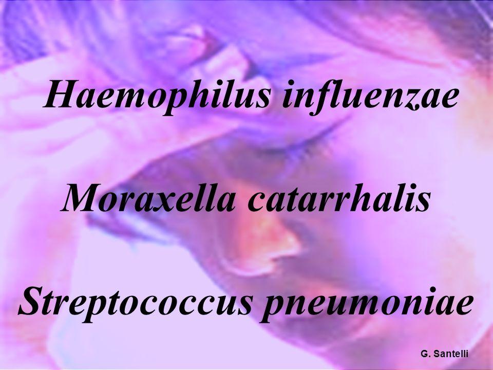 Haemophilus influenzae Moraxella catarrhalis Streptococcus pneumoniae