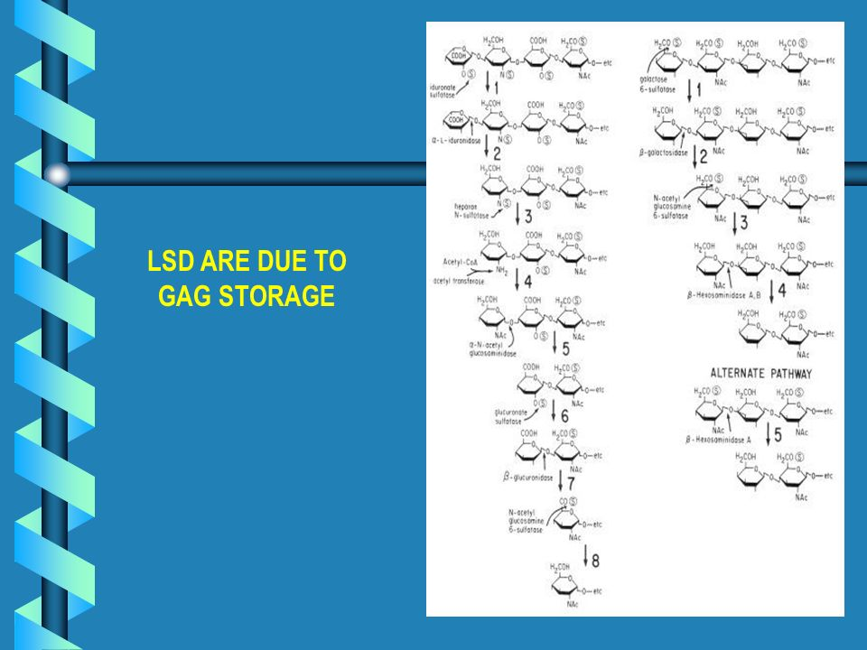 LSD ARE DUE TO GAG STORAGE