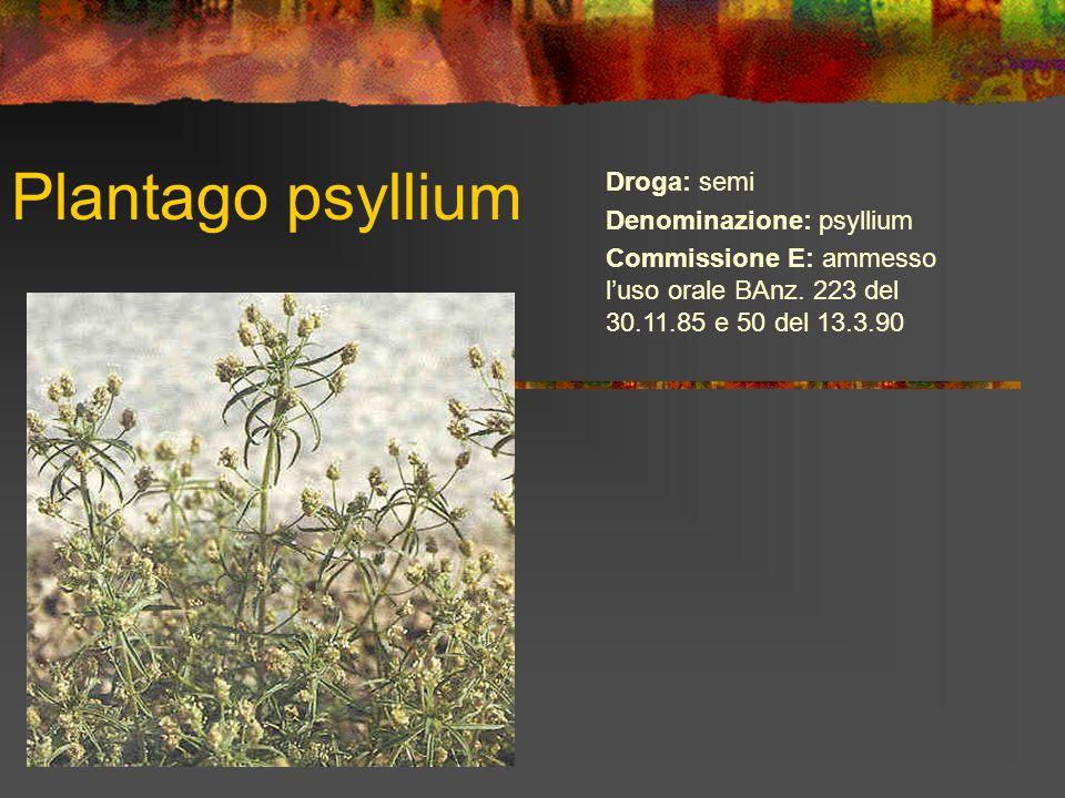Plantago psyllium Droga: semi Denominazione: psyllium