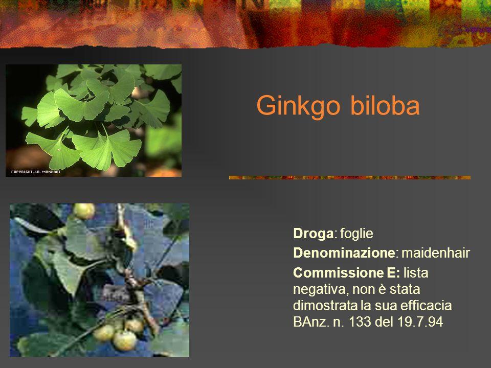 Ginkgo biloba Droga: foglie Denominazione: maidenhair