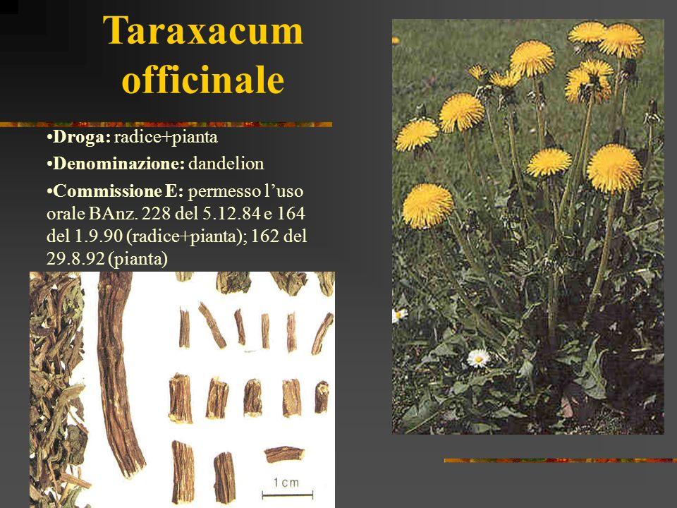 Taraxacum officinale Droga: radice+pianta Denominazione: dandelion
