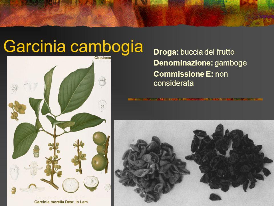 Garcinia cambogia Droga: buccia del frutto Denominazione: gamboge