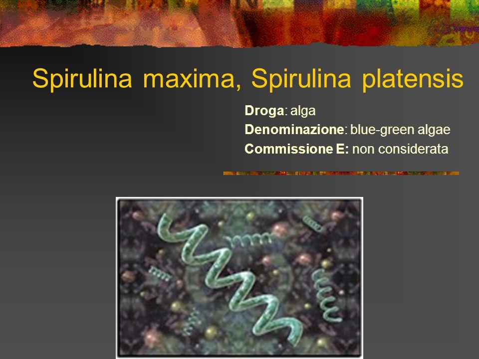 Spirulina maxima, Spirulina platensis