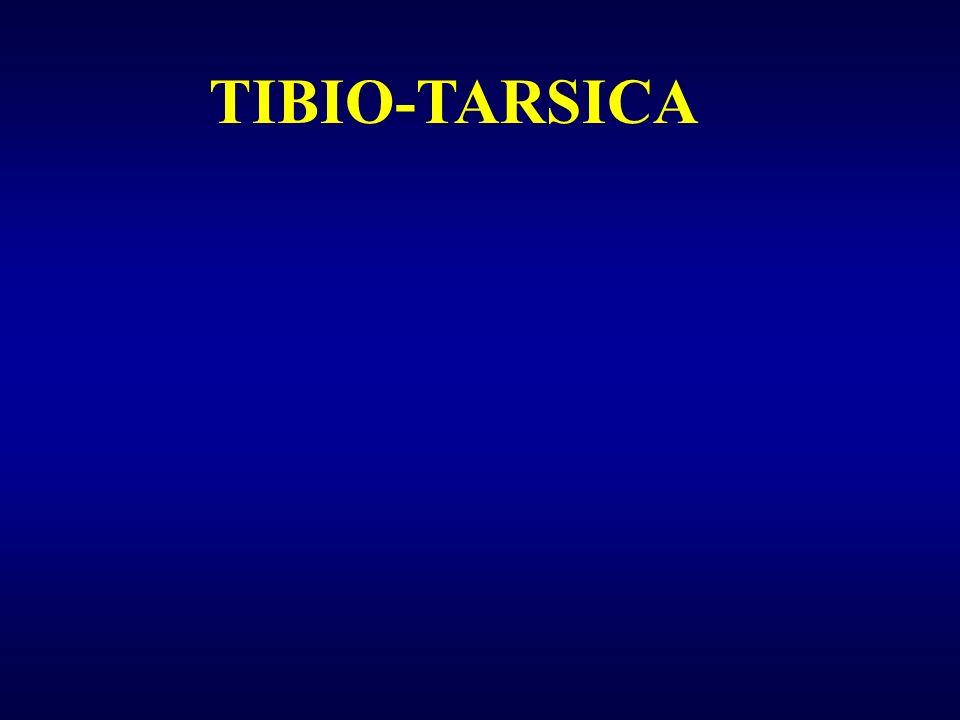 TIBIO-TARSICA