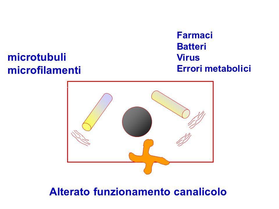 Alterazione microtubuli microfilamenti