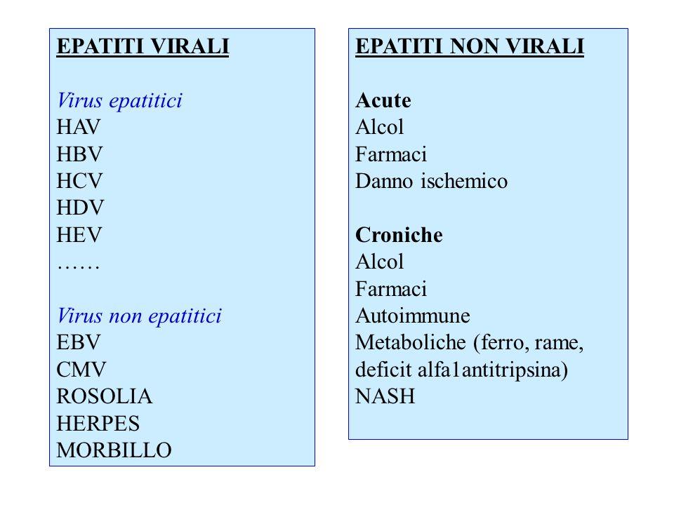 EPATITI VIRALI Virus epatitici. HAV. HBV. HCV. HDV. HEV. …… Virus non epatitici. EBV. CMV.