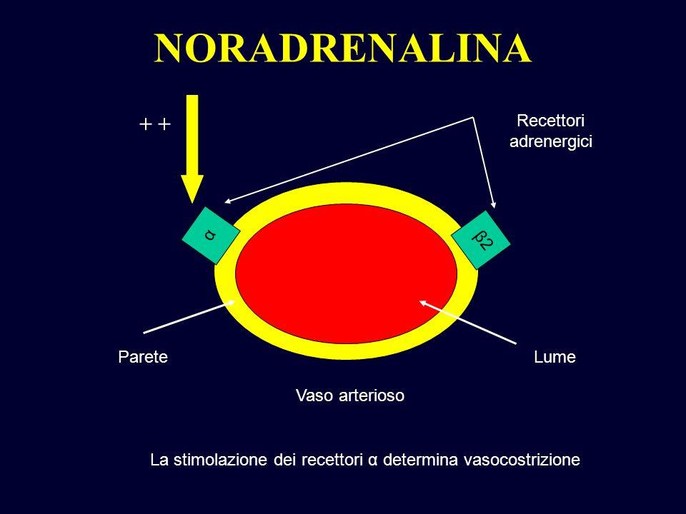 Recettori adrenergici