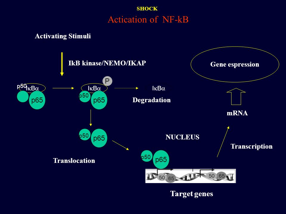 Actication of NF-kB Target genes Activating Stimuli Gene espression