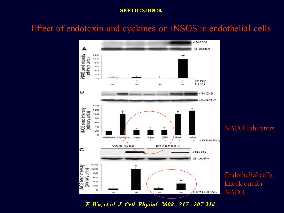 Effect of endotoxin and cyokines on iNSOS in endothelial cells