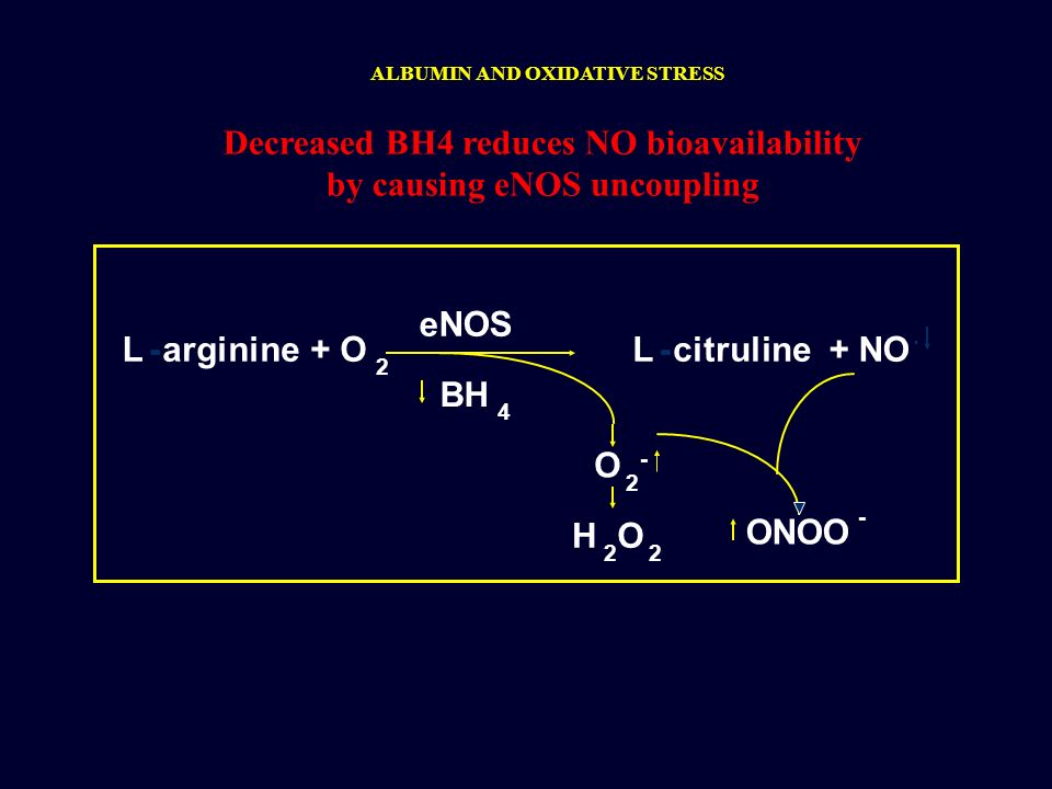 Decreased BH4 reduces NO bioavailability by causing eNOS uncoupling