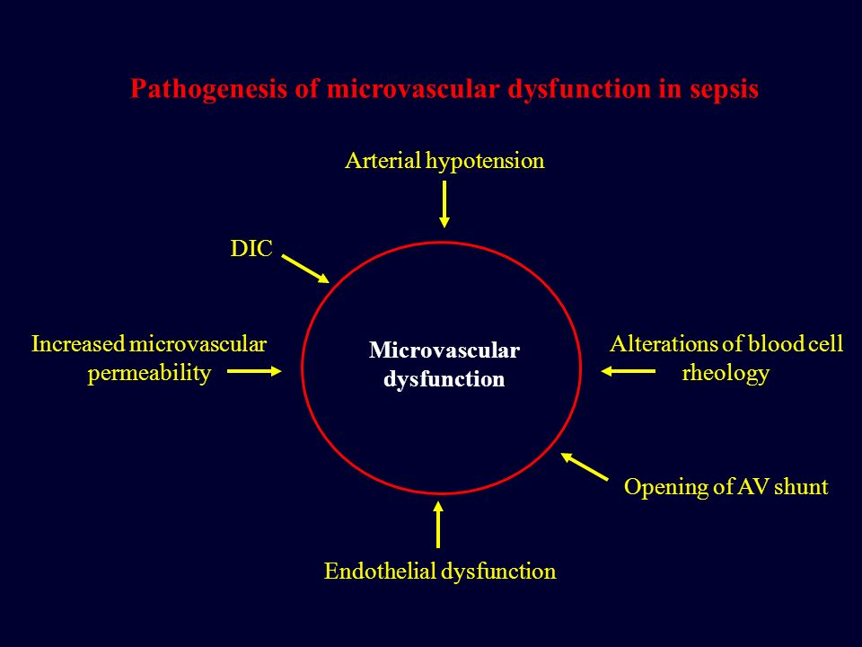 Pathogenesis of microvascular dysfunction in sepsis