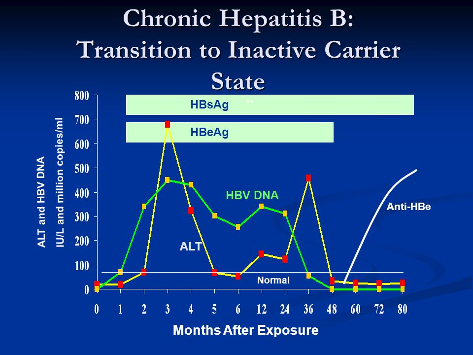 Chronic Hepatitis B: Transition to Inactive Carrier State