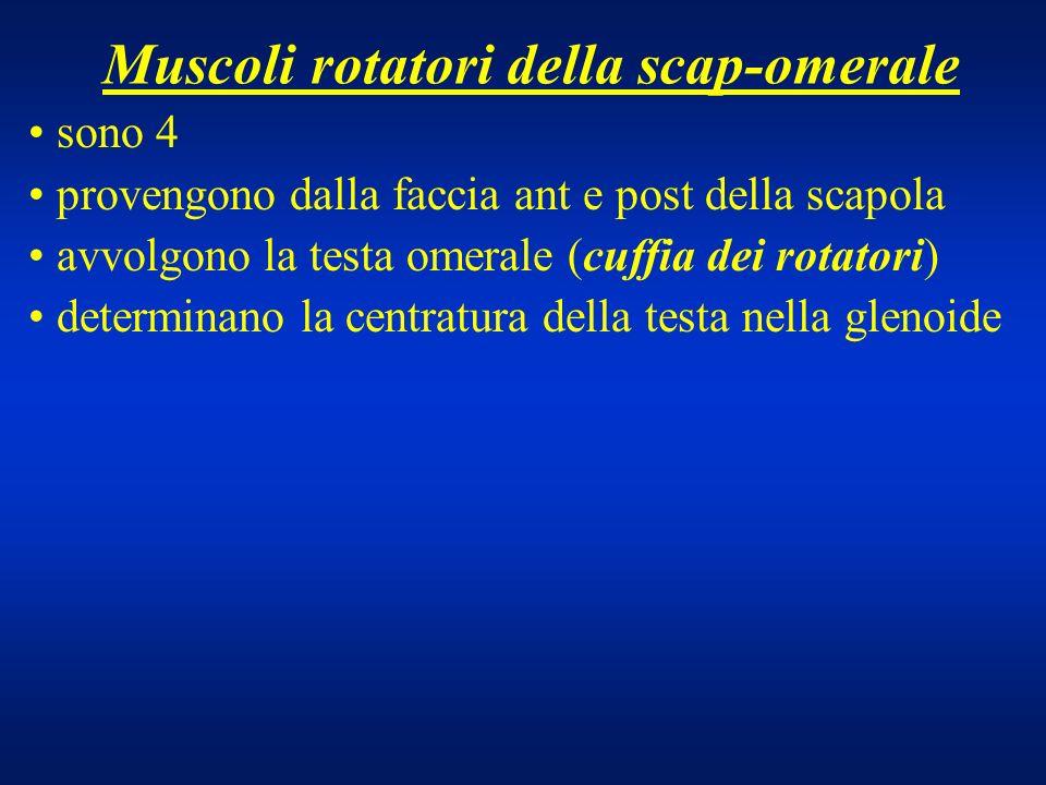 Muscoli rotatori della scap-omerale