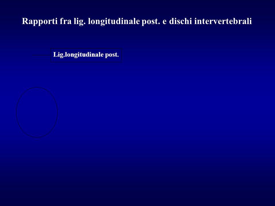Rapporti fra lig. longitudinale post. e dischi intervertebrali