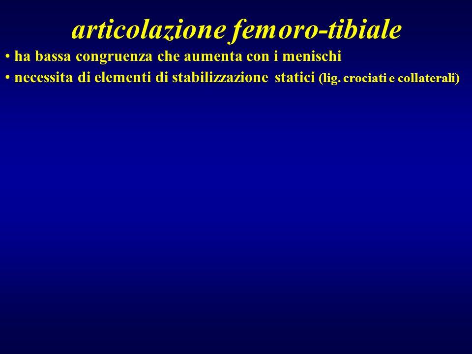 articolazione femoro-tibiale