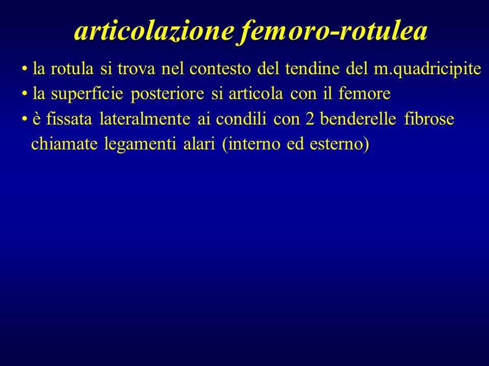 articolazione femoro-rotulea