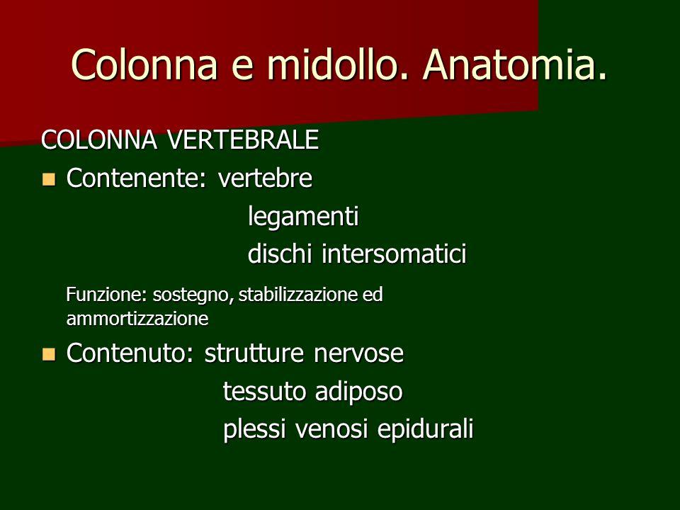 Colonna e midollo. Anatomia.