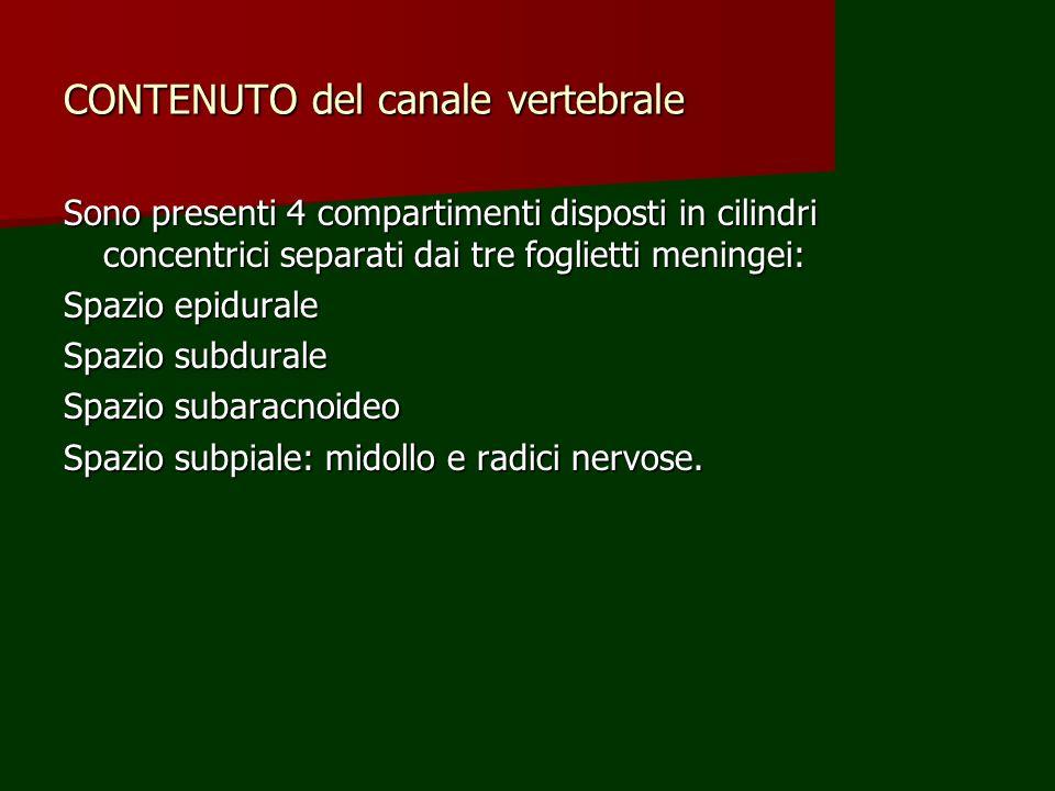 CONTENUTO del canale vertebrale