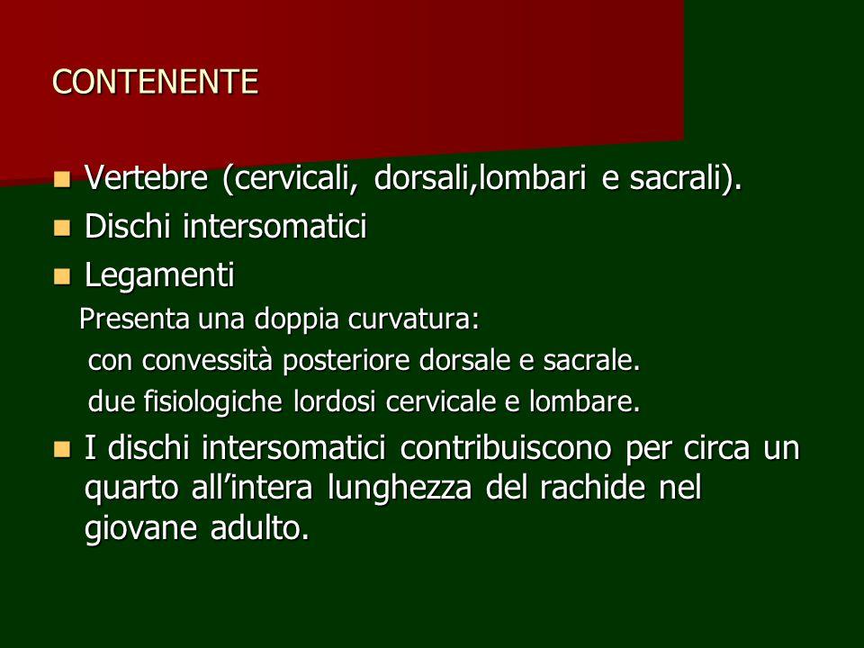 Vertebre (cervicali, dorsali,lombari e sacrali). Dischi intersomatici