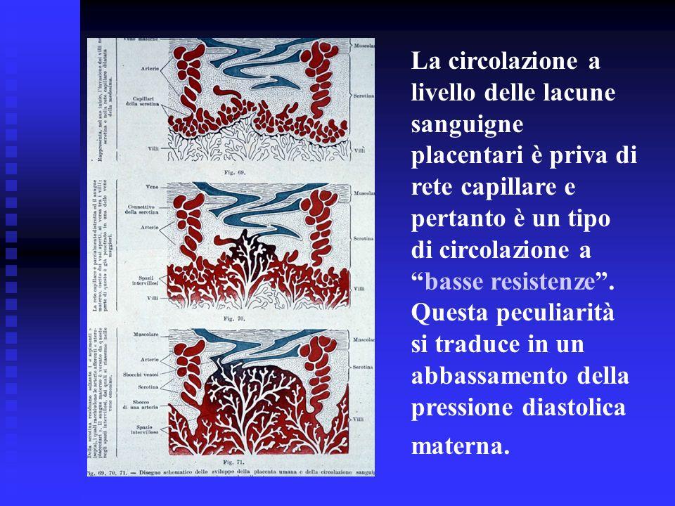 La circolazione a livello delle lacune sanguigne placentari è priva di rete capillare e pertanto è un tipo di circolazione a basse resistenze .