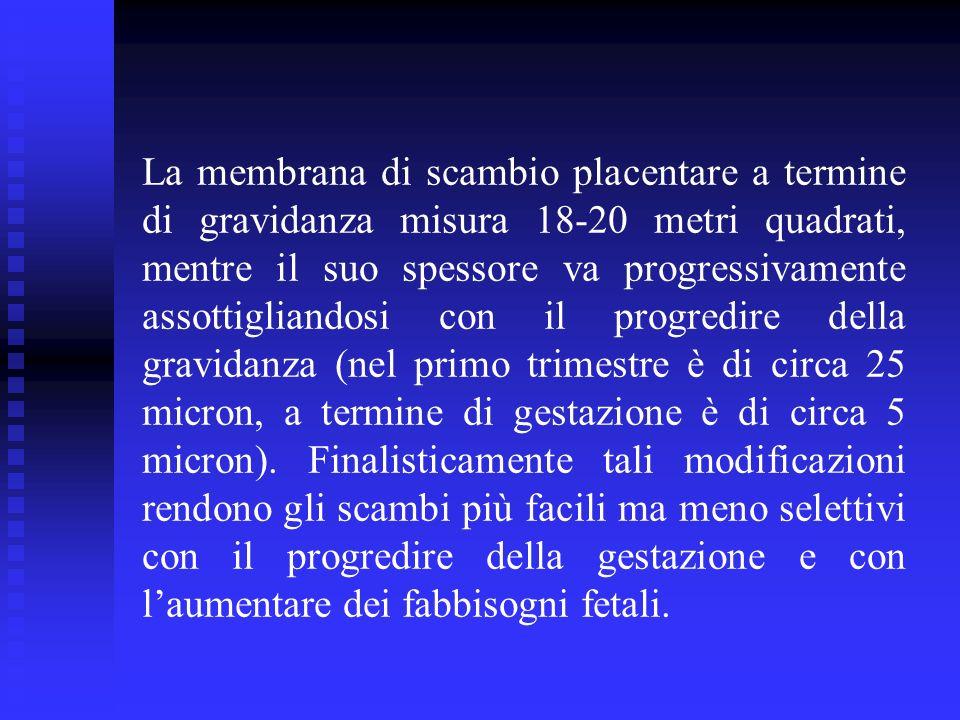 La membrana di scambio placentare a termine di gravidanza misura 18-20 metri quadrati, mentre il suo spessore va progressivamente assottigliandosi con il progredire della gravidanza (nel primo trimestre è di circa 25 micron, a termine di gestazione è di circa 5 micron).