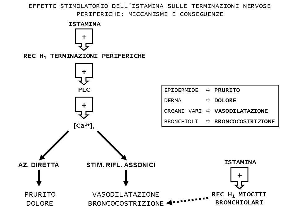 REC H1 TERMINAZIONI PERIFERICHE