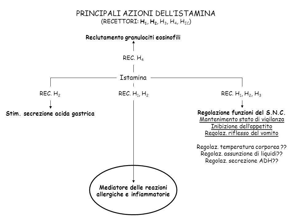 PRINCIPALI AZIONI DELL'ISTAMINA (RECETTORI: H1, H2, H3, H4, HIC)