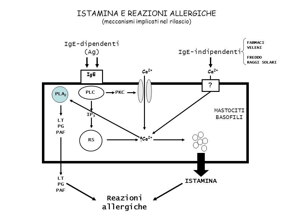 ISTAMINA E REAZIONI ALLERGICHE (meccanismi implicati nel rilascio)