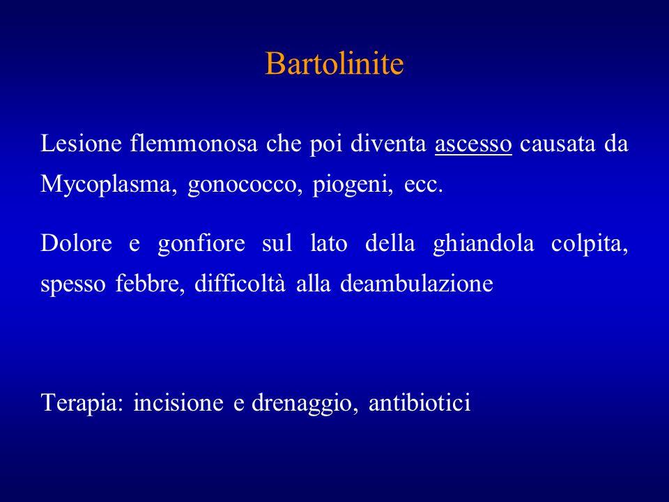 BartoliniteLesione flemmonosa che poi diventa ascesso causata da Mycoplasma, gonococco, piogeni, ecc.