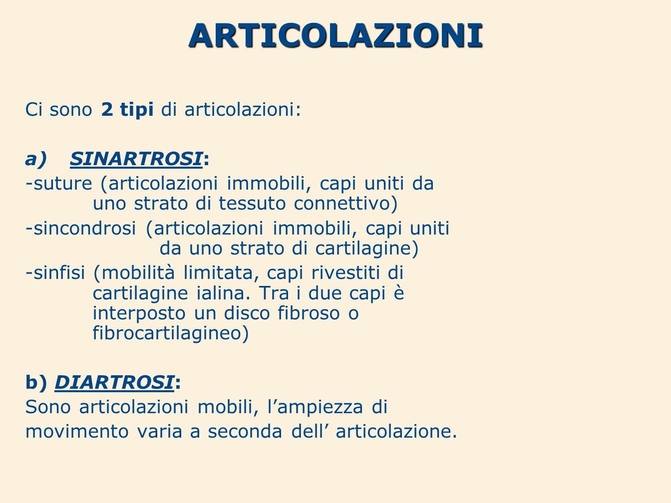 ARTICOLAZIONI Ci sono 2 tipi di articolazioni: SINARTROSI: