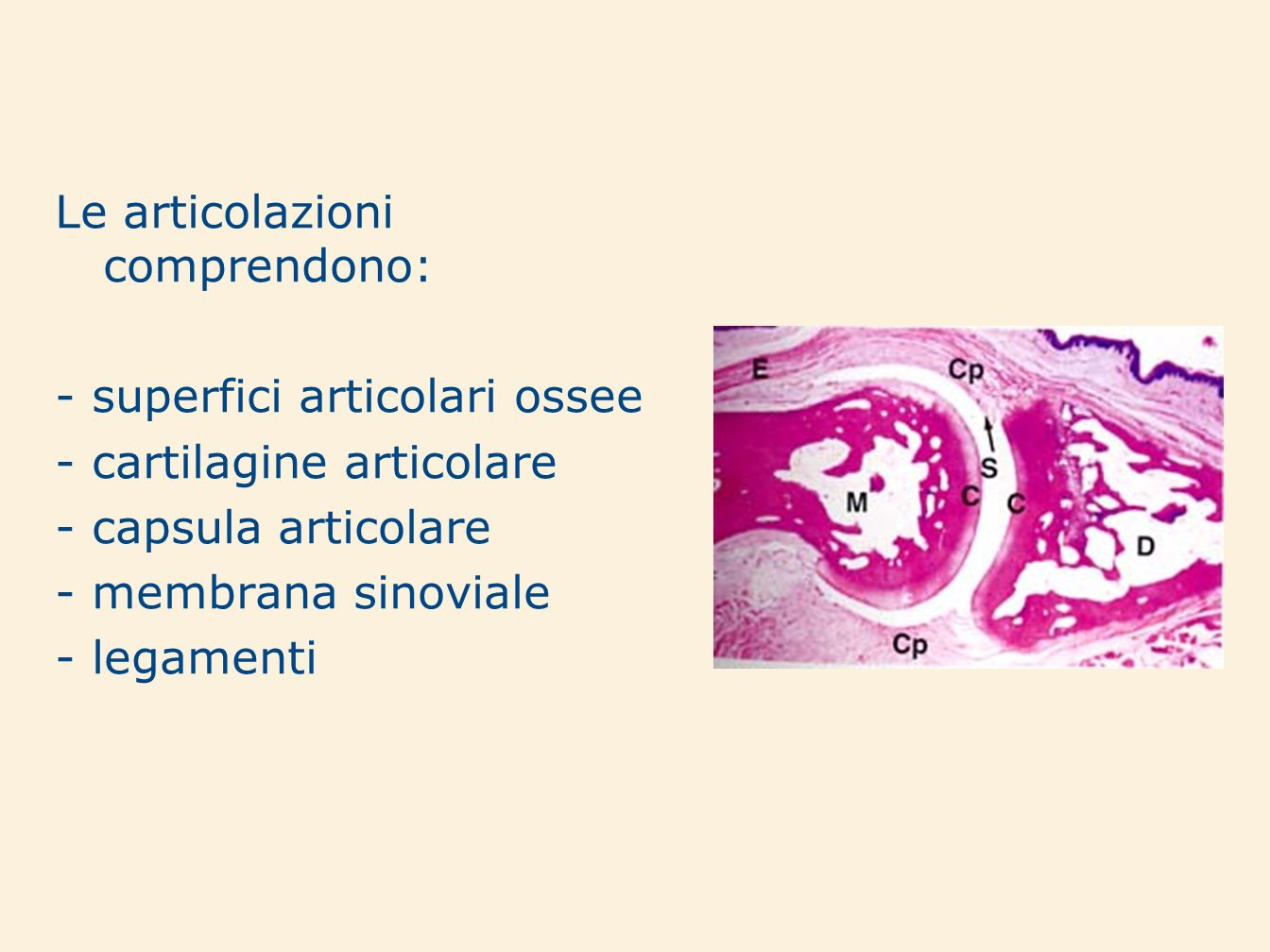 Le articolazioni comprendono: - superfici articolari ossee - cartilagine articolare - capsula articolare - membrana sinoviale - legamenti