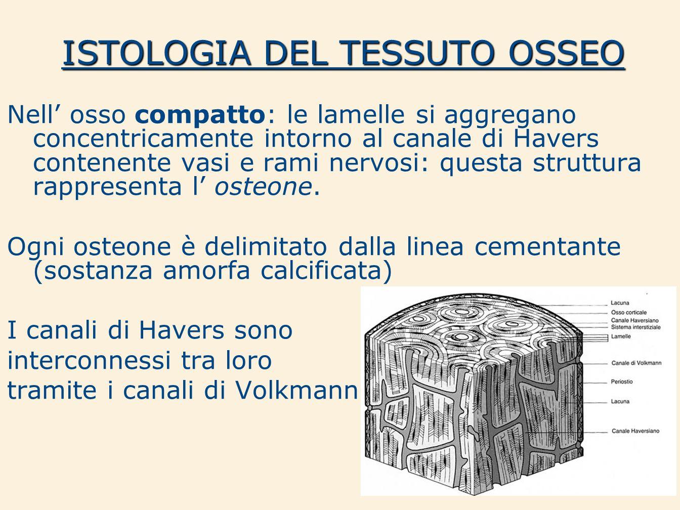 ISTOLOGIA DEL TESSUTO OSSEO