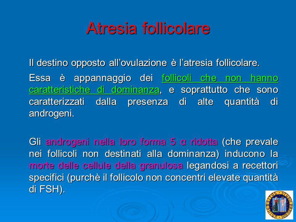 Atresia follicolare Il destino opposto all'ovulazione è l'atresia follicolare.