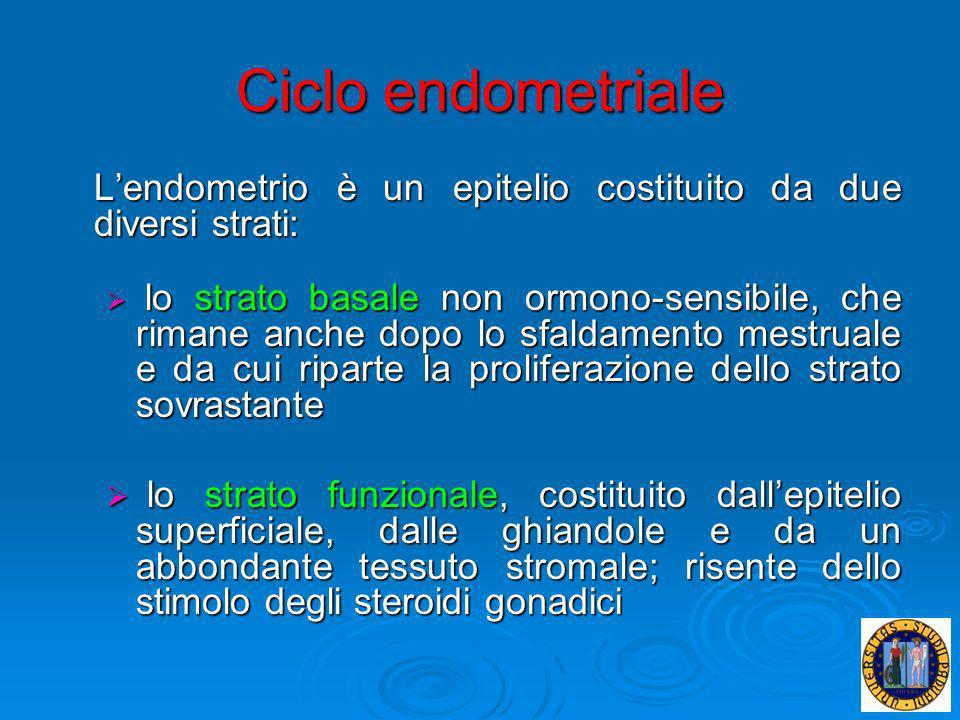 Ciclo endometriale L'endometrio è un epitelio costituito da due diversi strati: