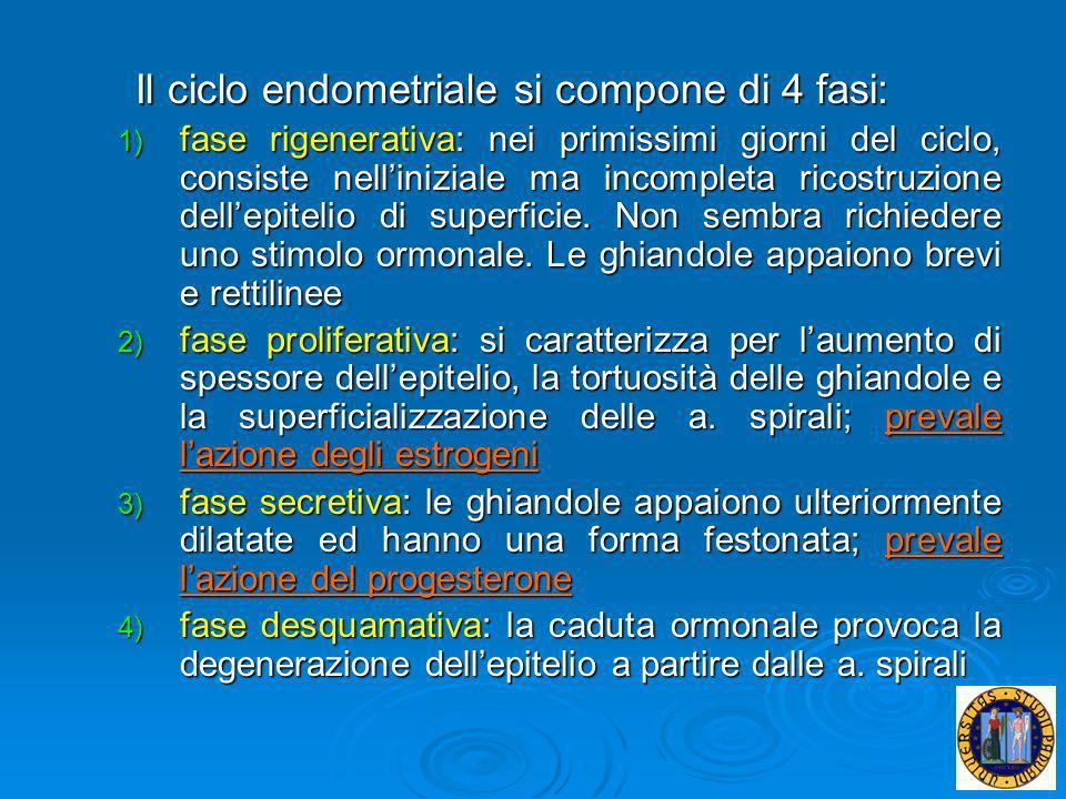 Il ciclo endometriale si compone di 4 fasi: